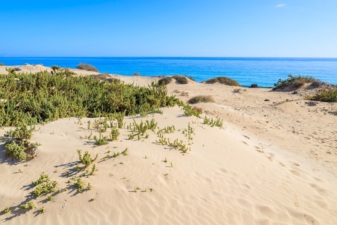 Sand dune with blue water sea view near Corralejo , Fuerteventura, Canary Islands, Spain